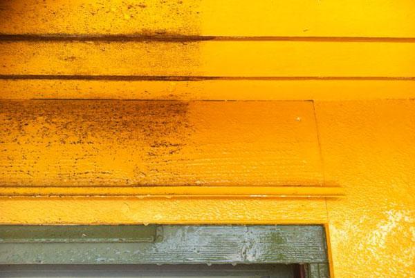 rengjøring av svertesopp på husvegg